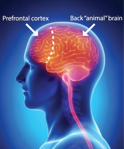 hersenen kapot door medicijnen